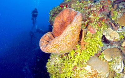 A Perfect Tropical Diving Vacation In TCI With Dive Provo