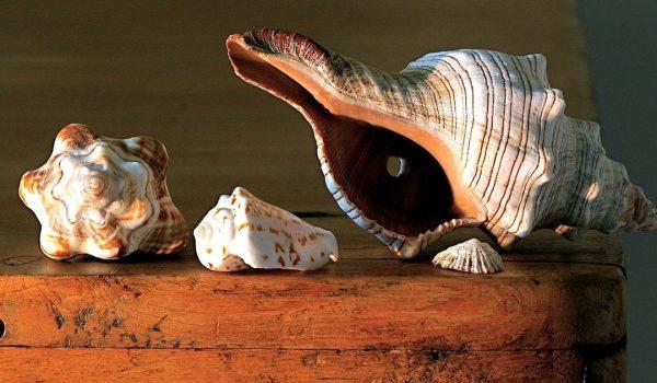 Turks And Caicos Souvenirs